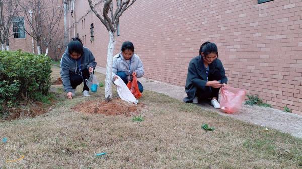 3、志愿者清洁绿化带.JPG